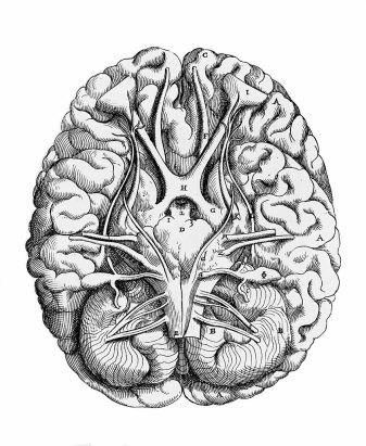838px-figure_showing_the_base_of_the_brain2c_thomas_geminus_wellcome_m0012913