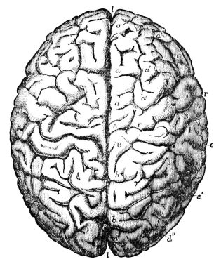 psm_v26_d768_brain_of_gauss
